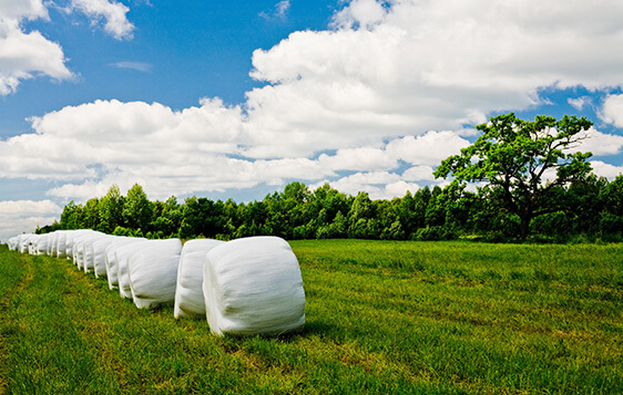 Extrusoras Para a Linha Agrícola - Pré Secado